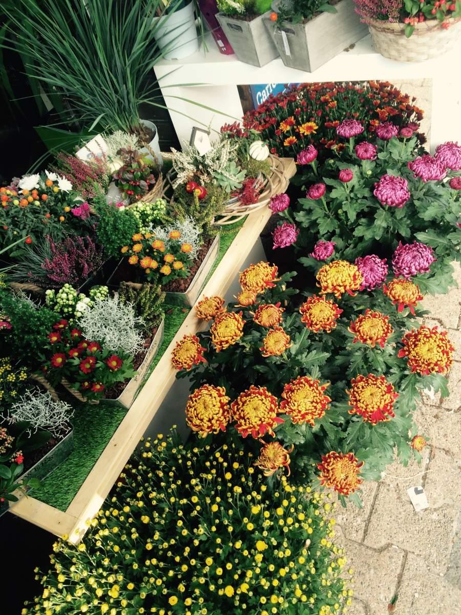 fleurs pour la toussaint meyzieu et alentours vente de fleurs et bougies meyzieu fleurs et style. Black Bedroom Furniture Sets. Home Design Ideas
